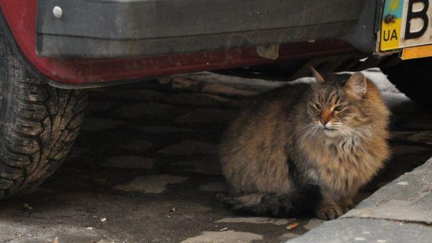 Кішка під машиною