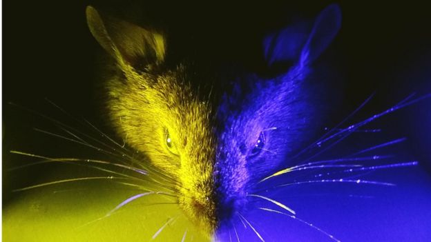 Mouse exposed to different types of light