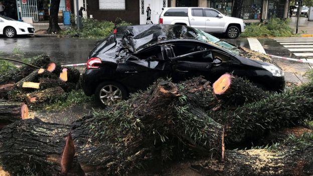 Un árbol cayó sobre un auto en Buenos Aires