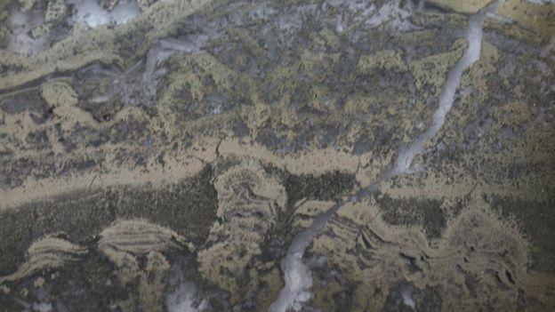 Foto electrónica de un estromatolitos