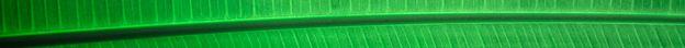 divisor verde