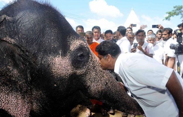 ஐக்கிய தேசியக் கட்சியின் ஜனாதிபதி வேட்பாளர் சஜித் பிரேமதாஸ