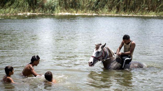 أحصنة لم تتحمل درجة الحرارة، فقام أصحابها بتبريدها من خلال أخذهم للسباحة في بحيرة قريبة من القاهرة في 22 يونيو/حزيران 2018.