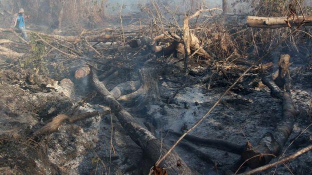 pembakaran hutan, pembersihan lahan