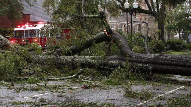 Un árbol caído en Wilmington, Carolina del Norte, tras el paso del huracán Florence