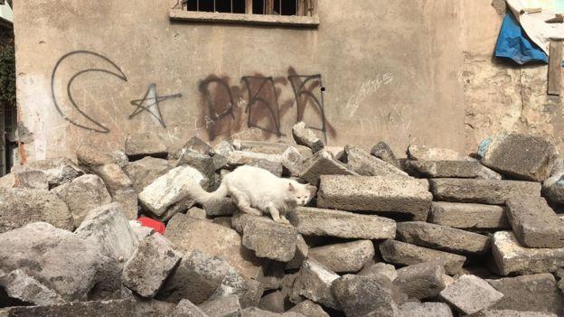 Sokaklardan geriye kalan molozlu meydanlarda dolaşan kedilerin sayısında gözle görülür bir artış var.
