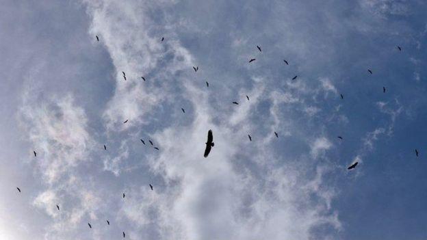 70 Foto Gambar Burung Terbang Indah HD Paling Bagus Free
