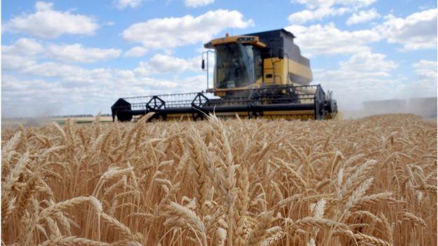 Урядовці твердять, що на ринку землі хочуть підтримати фермерів. Проте на здешевлення кредитів для них у проєкті бюджету поки що закладено 4,4 млрд грн.