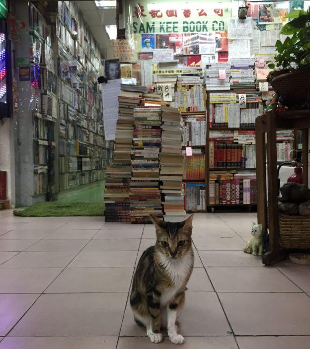森記在2004年因為增設二手書店,有更多空間收養貓。