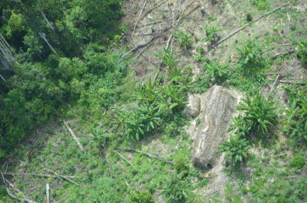 Maloca korubo no Vale do Javari