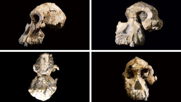 Vistas del cráneo encontrado en Etiopía