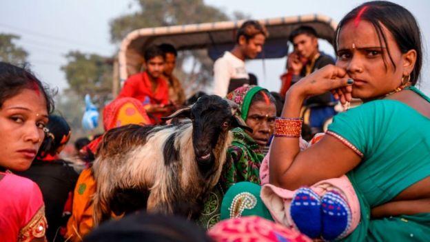 Женщины на телеге и козленок