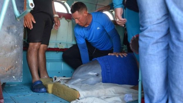 A dolphin is prepared to be transferred from Ciego de Avila