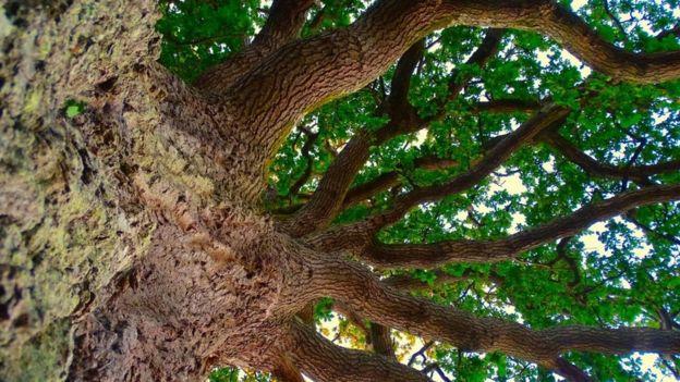 اختفاء الأشجار من العالم سيسبب تغيرات مناخية غير مسبوقة