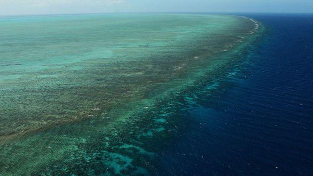 Según científicos, la Gran Barrera de Coral de Australia está agonizando y algunas de sus especies podrían extinguirse en los próximos años.
