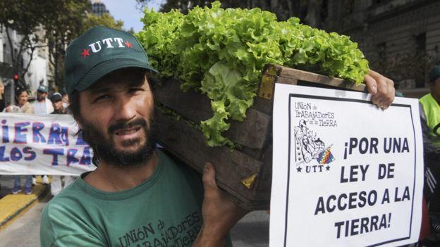 Productor de lechugas en Argentina