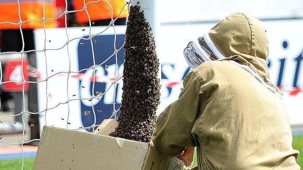 A beekeeper captures bees on Oldham's pitch