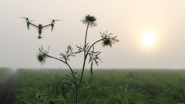 Drone sobrevoa fazenda
