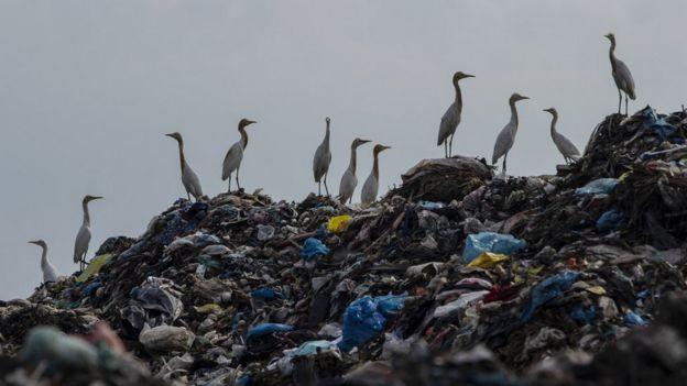 Pájaros sobre una montaña de desechos plásticos.