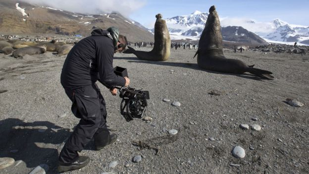 Elephant seals being filmed in Antarctica