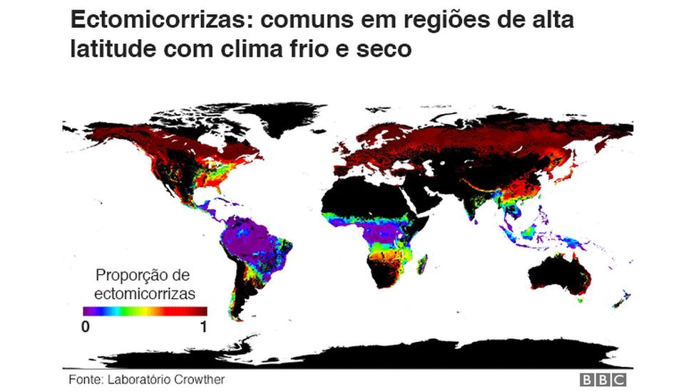 Mapa das ectomirrizas