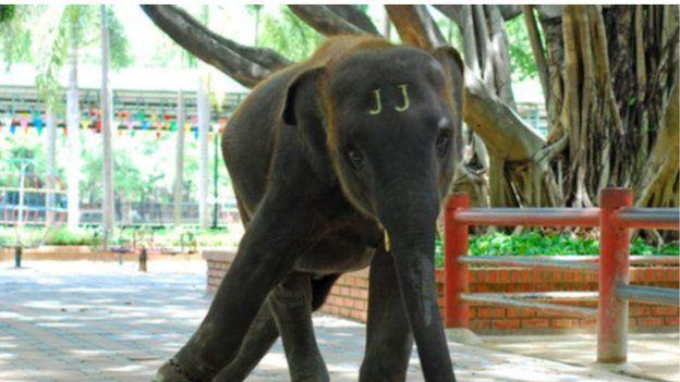 elephant straining at chain