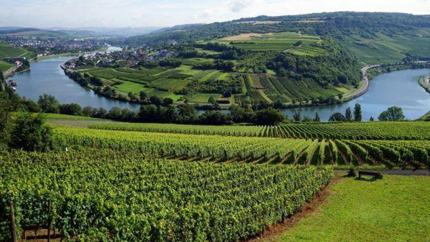 申根坐落于卢森堡的摩泽尔河谷,是卢森堡发达的葡萄酒产地。