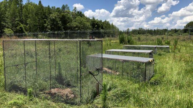 Некоторые тела прикрыты сетками для защиты от хищных птиц-стервятников