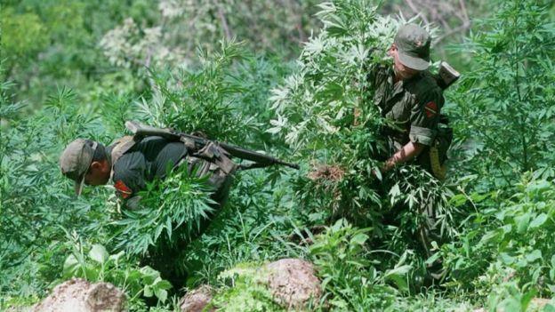 El pueblo de Las Varas está en una región de fuerte producción de drogas.