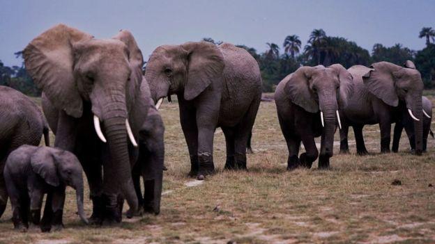 Manada de elefantes con cría