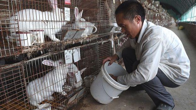 Farmed rabbits in China