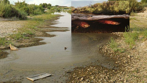 Río degradado con recuadro de río con salmón