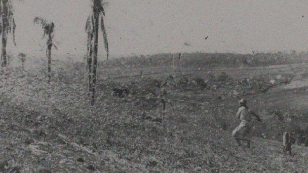 Agricultor combate infestação de gafanhotos no RS nos anos 1940 com vara de madeira