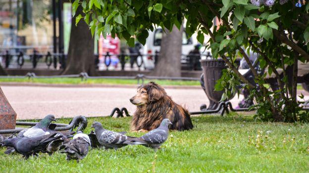 Pombos em um parque