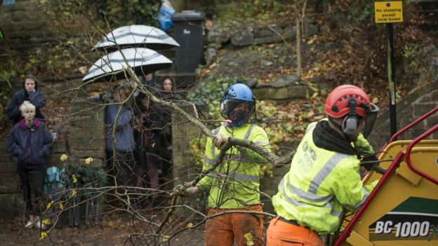 Members of the public look on as contractors cut down a tree in Rustlings Road