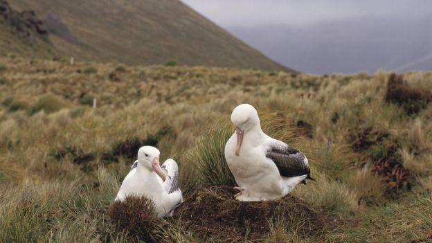 Aves na ilha