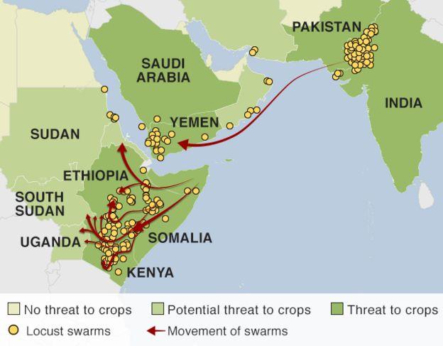 Locust invasion in East Africa