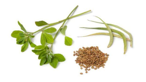 Fenogreco en hojas y en semilla