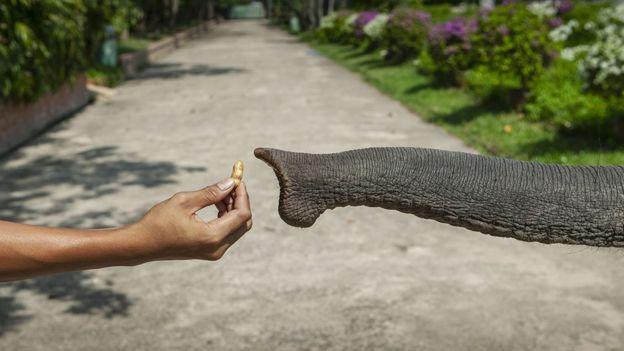 Mano ofreciéndole maní a un elefante