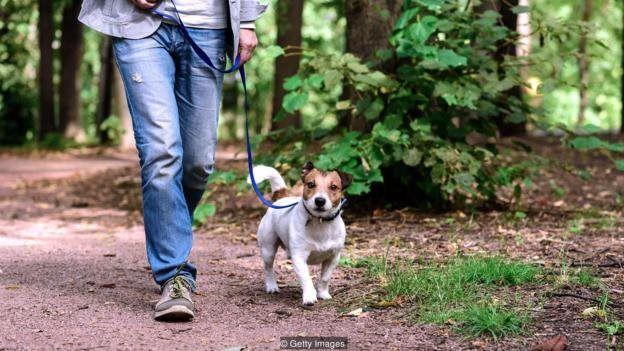 Homem andando com cachorro