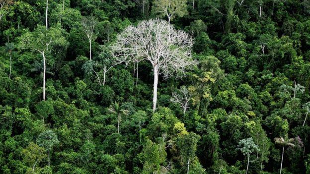 Floresta Amazônica em 2012