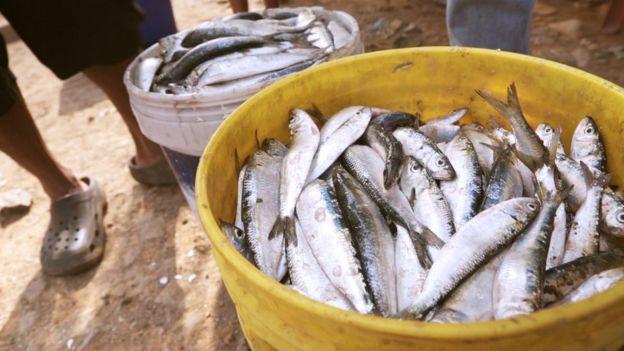Pescado em baldes