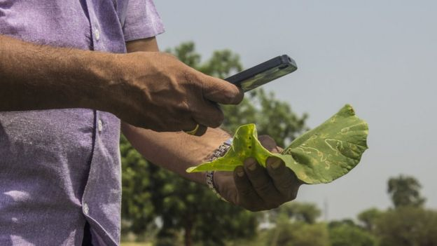 Tell me phone, what's destroying my crops?' - BBC News