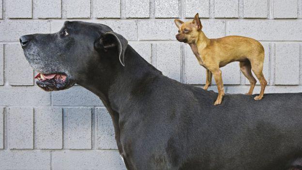 大狗与小狗