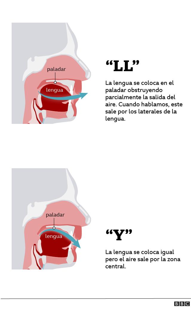 """Gráfico de la posición de la lengua al pronunciar la """"y"""" y la """"ll"""""""