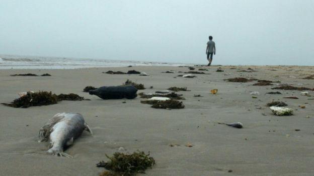 Thảm họa môi trường do Formosa gây ra đã ảnh hưởng nghiêm trọng đến hệ sinh thái biển và cuộc sống của người dân ven biển miền Trung