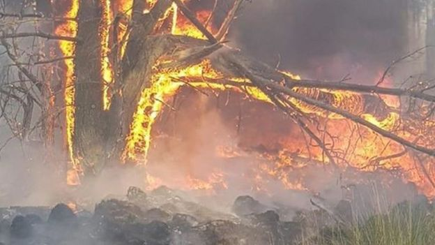 The flames spread quickly through the forest