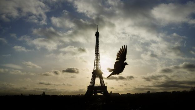 A bird flies in front of the Eiffel Tower ,which remained closed on the first of three days of national mourning,