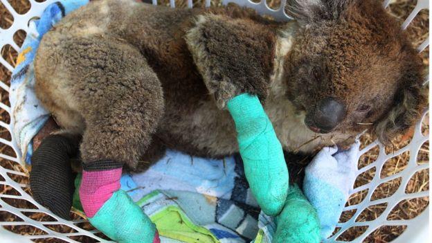صدها هزار حیوان در آتشسوزیهای استرالیا از بین رفتند