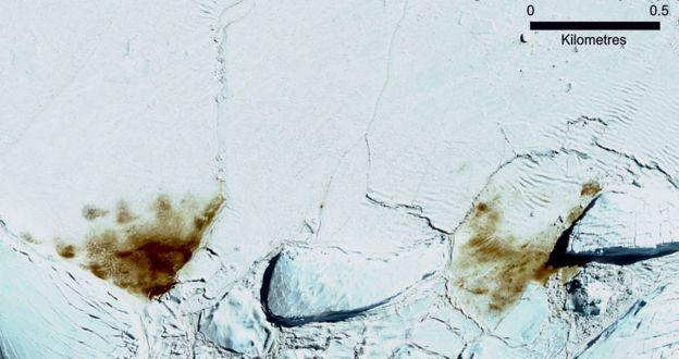 Колонія біля льодовика Доусон-Лембтон